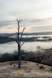 Morning fog in Goulburn River valley in Victoria, Australia Royalty Free Stock Images