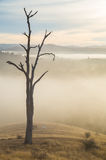Morning fog in Goulburn River valley in Victoria, Australia Stock Photos