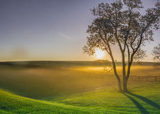 Morning Fog in Horse Country Stock Photography