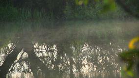 Morning fog hovering over the river, tree reflections in water. Stock footage stock video