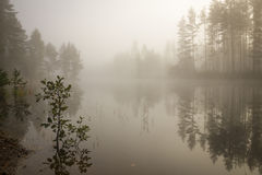 Morning fog at a lake Royalty Free Stock Photography