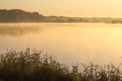 Morning fog on a lake Royalty Free Stock Photo