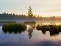 Morning fog on a lake in swamp. Fresh green birch in middle on small island. Stock Photo