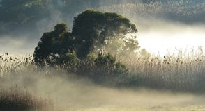 Morning fog.... Stock Images