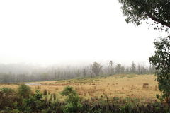 Morning fog on the Landscape of Tasmania. Clouds on field in Beautiful Tasmania country side village in the town of Sorell to Port Arthur, Australia Royalty Free Stock Photography