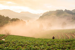 Morning fog on the mountain. At chiangmai thailand stock photography