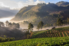 Morning fog on the mountain. At chiangmai thailand stock image