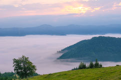 Morning fog in the mountains. summer landscape with fir forest on mountain slopes. Color toning. Low contrast. Stock Photography