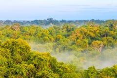 Morning fog over the brazilian rainforest in Brazil. View on the morning fog over the brazilian rainforest in Brazil stock photography