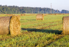 Morning fog over the field. Утренний туман над полем. The drains of hay in the field Stock Photography