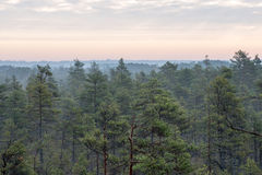 Morning fog over the forest and marsh Royalty Free Stock Photo