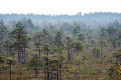 Morning fog over the forest and marsh Royalty Free Stock Photography