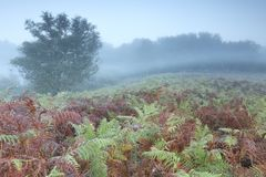 Morning fog over hill with fern stock photo