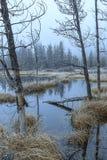 Morning fog over the marsh. Royalty Free Stock Photos
