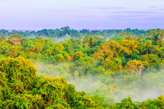 Morning fog over rain forest in Colombia. Morning fog over rain forest by Leticia in Colombia Stock Photos