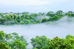 Morning fog over rain forest Trees in Brazil. View on morning fog over rain forest Trees in Brazil royalty free stock photography