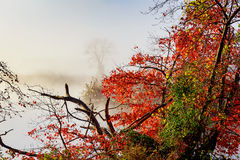 Morning fog over river in autumn Royalty Free Stock Image