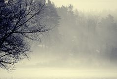 Morning fog Royalty Free Stock Images