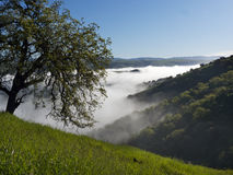 Morning fog over the valley. Stock Image