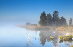 Morning fog over wild lake Royalty Free Stock Photography