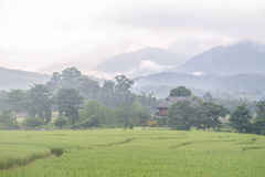 Morning Fog at Pai. Morning fog around rice fields Phu Pai Art Resort Stock Image