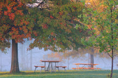 Morning fog in the park Stock Photography