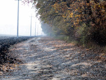 Morning fog, the plowed field and the road at a gold oak grove Stock Photo
