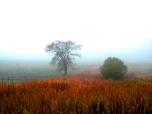 Morning fog. Royalty Free Stock Images