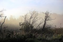 Morning fog rising off a marsh with silhouetted trees Royalty Free Stock Photography