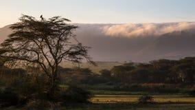 Morning fog Stock Images
