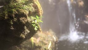 Morning fog steam and waterfall in the garden. stock footage
