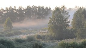 Morning fog in a summer forest. Sunrise stock video
