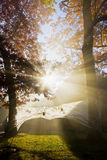 Morning fog and sun rays Royalty Free Stock Photo