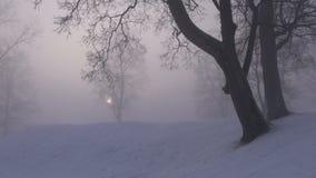 Morning fog and sun in winter park. Morning fog and sun in winter time  park stock video