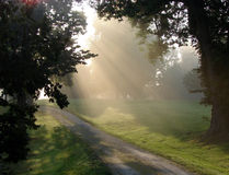 Morning Fog Sunlight Haze over Country Dirt Road. Old country dirt road with trees bathed in soft morning hazy sunlight fog light stock photos