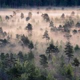 Morning fog and sunrise in Torronsuo National Park, Finland Royalty Free Stock Photography