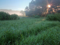 MORNING FOG ON SWAMP Stock Photography