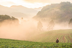 Morning fog on tha mountain. Morning fog on the mountain at chiang mai thailand stock image