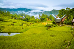 Morning fog in Toraja. Photo of fields of grass and morning fog in forest near village with traditional tongkonans in Toraja region in Sulawesi, Indonesia Stock Image