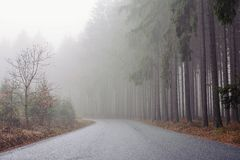 Morning fog among the trees in the road forest. Royalty Free Stock Photos