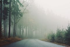 Morning fog among the trees in the road forest. Stock Photo