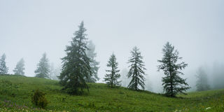 Morning fog. Trekking in the Altai Mountains Stock Photos