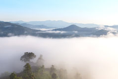 Morning fog in tropical rainforest from the top of the hill Royalty Free Stock Photo