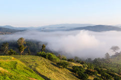 Morning fog on tropical rainforest from top of the hill Royalty Free Stock Photo