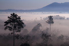 Morning fog at Tung SlangLuang, Thailand Royalty Free Stock Images