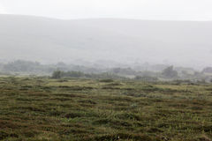 Morning fog in the valley of the meadow, haze. Royalty Free Stock Image
