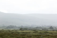 Morning fog in the valley of the meadow, haze. Stock Photography