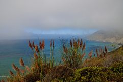 Morning fog and vegetation in Big Sur. Morning fog in Big Sur on the California coast, USA Royalty Free Stock Images