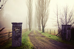 Morning Fog. View down the dirt road on a foggy morning with poplar trees Stock Images