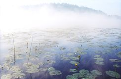 Morning fog on wild forest lake in Karelia Stock Image